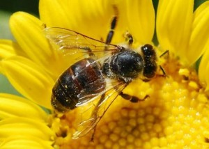 bees wasps beaumont
